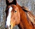 Спешно слагат чипове на конете