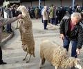 Временно се затваря общинският пазар за живи животни в с. Могила