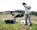 Освободиха излекуван скален орел