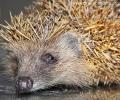 Собствениците на диви животни са длъжни да ги регистрират в РИОСВ