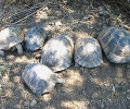 312 сухоземни костенурки конфискуваха  експертите от РИОСВ – Стара Загора от частен дом в Нова Загора