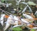 """РИОСВ – Стара Загора проверява сигнал за наличие на измряла риба в язовир """"Розов кладенец"""""""