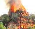 """Няма пострадали хора, животни и сгради при пожара в местността """"Каракос"""" край Казанлък"""