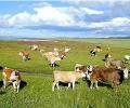 Извънредно положение за добитъка в Южна България обяви Агенцията по храните