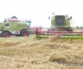Жътвата на пшеницата в Старозагорска област приключва с 418 кг среден добив от декар