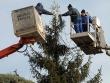 Украсиха 15-метрова елха на площада пред Община Стара Загора