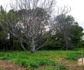 Нова паспортизация описа още 1500 дървета в парк