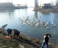 Екипът на Зелени Балкани подхранва бедстващи пеликани на язовир