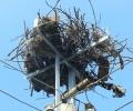 EVN България посреща щъркелите с 242 нови платформи за гнезда по стълбове