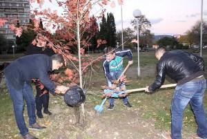 """В края на миналата година членове на МГЕРБ залесиха 17 дъба в парк """"Зеленият клин"""""""
