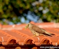 Небето на Стара Загора - дом на рядък вид птици
