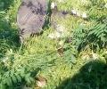 Малки токачки се излюпиха във волиерата на новия парк в Стара Загора
