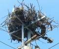 """""""Eлектроразпределение Юг"""" получи разрешително от МОСВ за продължаване на поставянето на платформи за щъркелови гнезда върху електрически стълбове до 2021 г."""