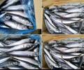 Има ли опасна риба на пазара? Сравнително изследване на
