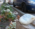 Скрижали на камък борят крадци на декоративни растения в Стара Загора