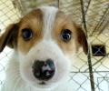 Кампания в помощ на бездомните животни