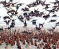 Вятърната електроцентрала на AES България е готова да посрещне зимуващите гъски