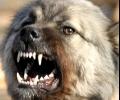 Разследват инцидент с жена, нахапана от собствените й кучета в с. Ръжена