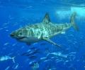 Спасяването на акулите е в нашите ръце