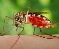 От днес започва пръскането против комари в Стара Загора