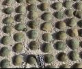 Близо 1000 старинни монети открити в къща в Зетьово. 69-годишна даде на измамници 29 000 лв.