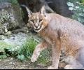 Благодатна година за старозагорския зоопарк