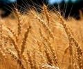 Отчетен е 8,9% ръст в аграрния отрасъл за 2017 г.