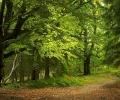 По сигнал на WWF ще се проверява пазим ли старите си гори