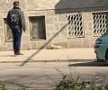 Заснеха избягали норки в Стара Загора и на бензиностанция
