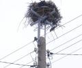 Електроразпределение Юг монтира 166 нови платформи за щъркелови гнезда по стълбове от електроразпределителната мрежа