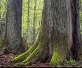 Как да сигнализираме за незаконна сеч, съветва WWF по случай Световния ден на горите 21 март