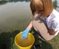 WWF пусна над 20 000 есетри по Дунав