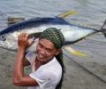 WWF: Рибата в Европа свършва