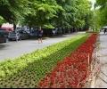 50 хиляди нови цветя ще красят Стара Загора