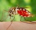 На 11 и 12 юли ще се извърши повторна дезинсекция срещу имаго на комари в Стара Загора