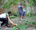 Почистват двора на къщата на Ханчев, подготвят го за артфестивал през септември