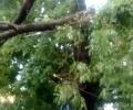 Сигнали за паднали клони на дървета след бурята снощи в Стара Загора