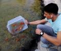 50 златни рибки пуснаха в японското езерце в старозагорския парк