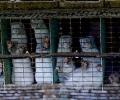 Доброволци ще прекарат седмица в клетка до Парламента в протест срещу фермите за кожи
