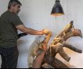 Близо еднометрова зелена игуана свалиха от липа в Стара Загора