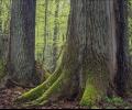 WWF картира най-ценните стари гори у нас, собственост на общините