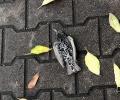 Мъртви косери са открити по старозагорските улици