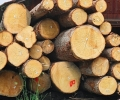 Държавите в ЕС допускат внос на нелегална дървесина, гласи нов доклад на WWF