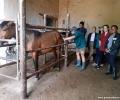"""Студенти по ветеринарна медицина от ТрУ в помощ на """"дивите"""" коне"""