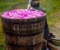 Празнична програма на онлайн Фестивал на Розата 2020 в Казанлък