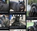 Голямо куче нахапа жестоко 10-годишно момче в Крън