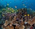 В Световния ден на океана WWF алармира за рисковете, на които го излагаме