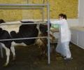 Бъдещите ветеринарни лекари от Тракийския университет държат държавен изпит присъствено, при спазване на противоепидемични мерки