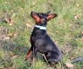 Изграждат пространства за разходка на дребни породи кучета в Стара Загора