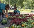 Хиляди нови цветя ще красят Стара Загора